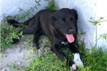Picture of Socks (Curr Pitt mix)