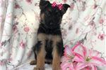 Picture of Jasmine