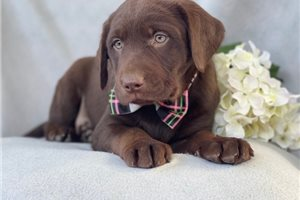 Picture of Cocoa
