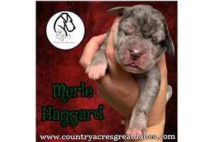 Picture of Merle Haggard