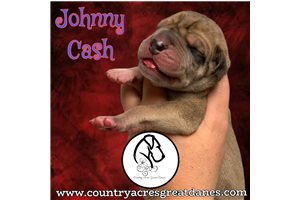 Picture of Johnny Cash