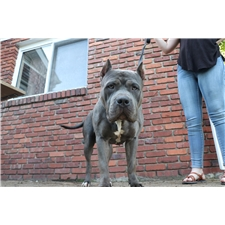 View full profile for Blue Iron Kennel