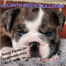 View full profile for Atlanta Exotic Bulldogs