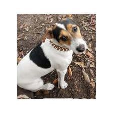View full profile for Myrtle Beach Jack Russells