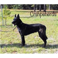 View full profile for Cr Shepherds