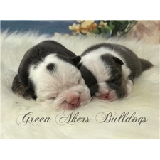 View full profile for Green Akers Bulldogs