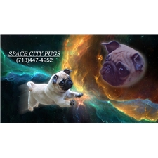 View full profile for Space City Pugs