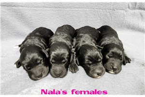 Picture of Nalas pups