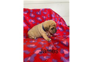 Picture of James