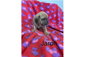 Picture of Jaron