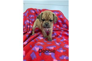Picture of Debbie