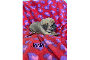 Picture of Josie