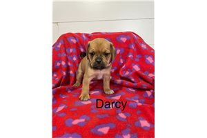Picture of Darcy
