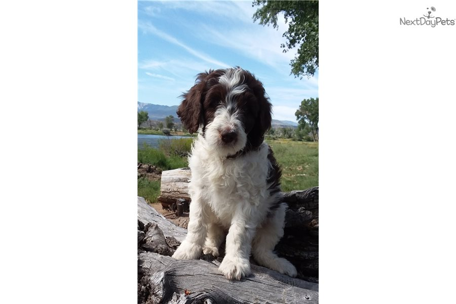 Lottie: Mixed/Other puppy for sale near Western Slope
