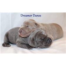 View full profile for Dreamer Danes