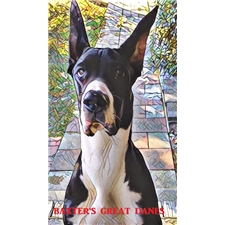 View full profile for Baxter's Great Danes Bgd