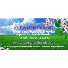 View full profile for My Puppies Florida, Llc