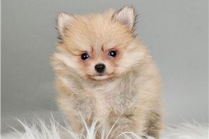 Picture of Tiny Nina