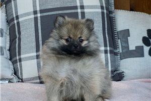 Picture of Alvin