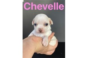Picture of Chevelle