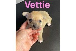 Picture of Vettie