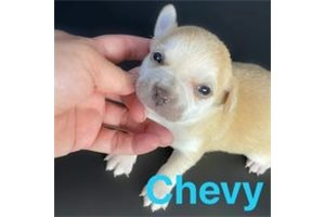 Picture of Chevy