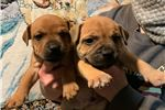 Picture of Red litter
