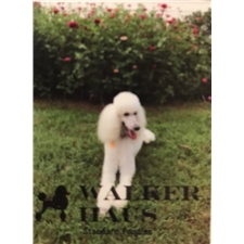 View full profile for Walker Haus Standard Poodle