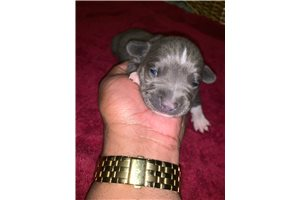 Picture of Baby Blue