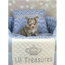 View full profile for Lil Treasures