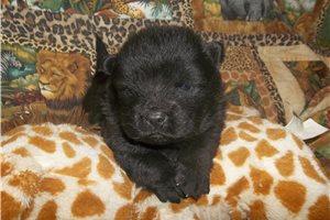 Picture of black velvet