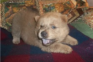 Picture of sugar bear