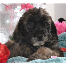 View full profile for 123Labradoodle