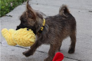 Picture of Yellow Collar