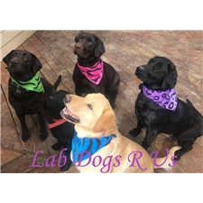View full profile for Lab Dogs R Us
