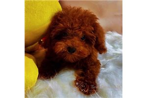 Picture of AKC Harry
