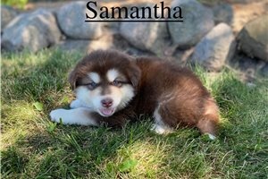 Picture of Samantha