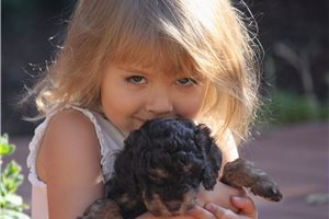 Featured Breeder of Mini Bernedoodles with Puppies For Sale