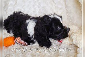 Picture of Albus