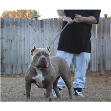 View full profile for Platinum Bred Kennel