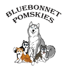 View full profile for Bluebonnet Pomskies