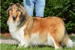 Picture of Foster, AKC