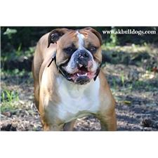 View full profile for Sk Bulldogs