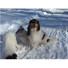 View full profile for Brandon's Collies