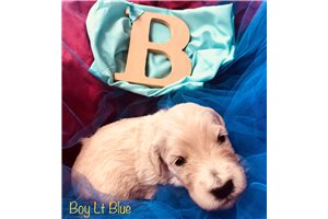 Picture of Boy Lt Blue