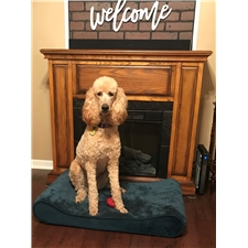 View full profile for Sweet Sandy'S Doodles