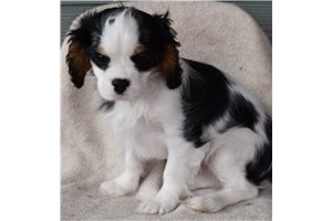 Picture of puppy