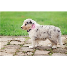View full profile for Kay's-Collies