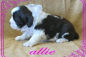 Picture of Allie