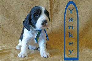 Picture of Yankey